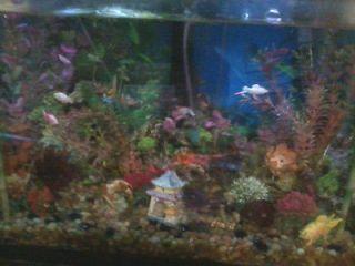 20 Gallon Glass Fish Tank, Stand & Decorations