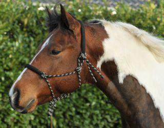 horse neck collar