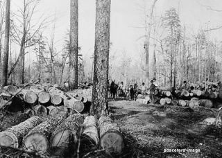 Logging Lumberjacks Scene felled trees horse drawn equipment photo