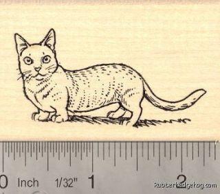 Munchkin Cat Rubber Stamp H14016 WM