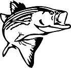 BLACK Vinyl Decal   Striper fish fishing salt water lake bass fun