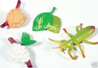 PRAYING MANTIS CYCLE MODELS ~ INSECT LORE~FREE SHIPPING
