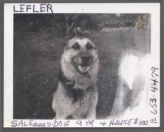 Vintage Polaroid Photo Sad German Shepherd Dog For Sale 793291