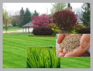 250g HARD WEARING LAWN GRASS SEED CREATE REPAIR ENHANCE