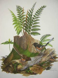ray harm rufous sided towhee songbird ltd ed print time left $ 39 95