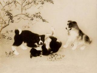 Akita Japanese Cute Puppies Playing Dog Print
