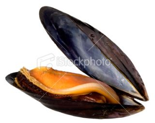 stock photo 10153166 mussel clipping path