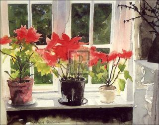 Richard Akerman Poinsettias Flowers Window Print