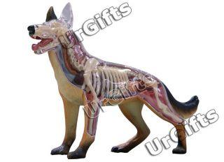4D Vision Puzzle Animal Anatomy Model New Canine Dog