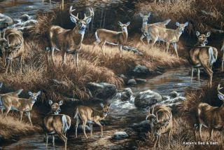 deer big buck doe wildlife country mountain stream brown scenic