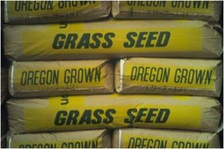 90 Kentucky Bluegrass 10 Perennial Rye Grass Lawn Turf Seed 5 lb Bag