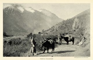 1925 Print Fred Bremner Tibet Yak Mountain Landscape Himalayas