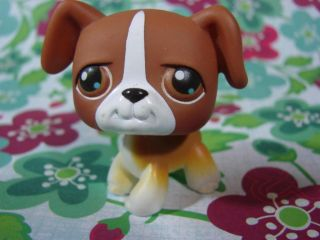 Littlest Pet Shop LPS #25 Brown & White Boxer dog w Brown Eyes