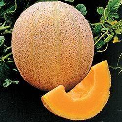 Cantaloupe Hales Best Jumbo 30 Vegetable Fruit Seeds
