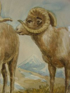 dall sheep very well done watercolor painting featuring two dall