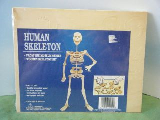 Human Skeleton 3D Wooden Puzzle Kit New