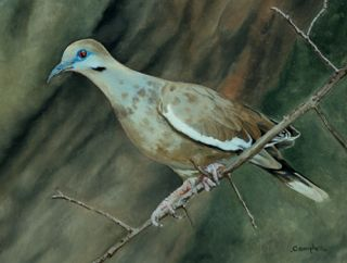 Original Oil Painting Whitewing Dove Frame Art Realism