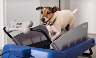 Dog Tread Treadmill for Small Dogs Pups Training Portable Digital