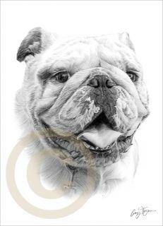 Dog English Bulldog Le Art Pencil Drawing Print A4 Signed by Artist