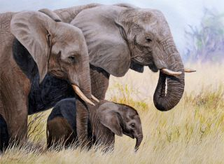 Elephant Africa Original Oil Painting Canvas Jason Morgan Wildlife Art
