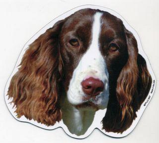 English Springer Spaniel Dog Head Car Magnet