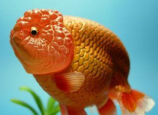 Yujin Dollhouse Miniature Aquarium Fish Ranchu Figure