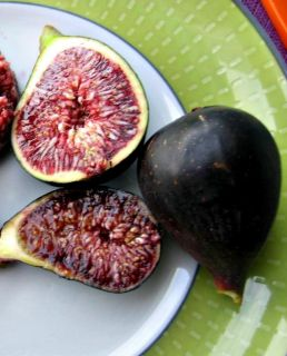 Fig Tree Galicia Negra Black Fig with Purple Pulp