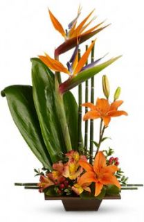 elefloras Exoic Grace 77 1A Fresh Flower Delivery