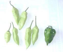 RARE RARE White Ghost Pepper Seeds Bhut Jolokia Hot Hot