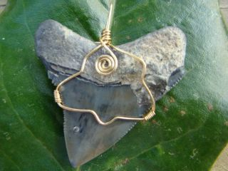 Quality Megalodon Shark Tooth Necklace Pendant 2 1 4