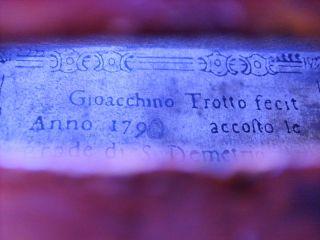 Old Violin Italian Label Gioacchino Trotto