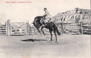 Ranch Sport Scene Glendive Montana Postcard