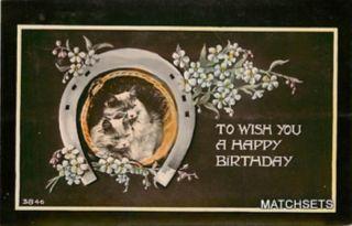 Happy Birthday Greetings Horseshoe Cute Cats Postcard