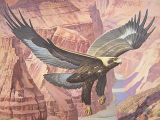 Arthur Singer Golden Eagle Grand Canyon Ed Print