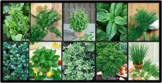 Herb Garden Lot 10 Varieties Over 2 235 Fresh Seeds Non GMO