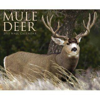 Mule Deer 2011 Wall Calendar: Willow Creek Press: 9781607552390