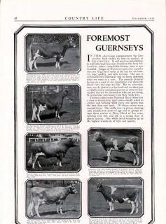 FP 1923 Foremost Dairy Bull Guernsey Breeding Farm NY Ad
