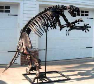 Replica Giant Fossil Ground Sloth Skeleton