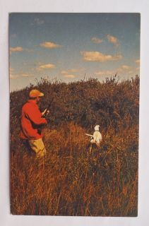1960s Game Bird Hunter Hunting Dog Manitoba Government Travel Winnipeg