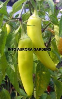 50 Hungarian Yellow Wax Hot Pepper Seeds Vegetable