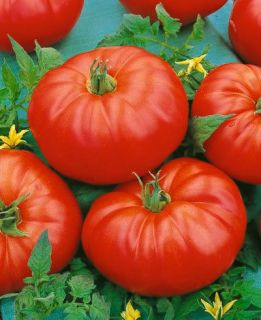 Vegetable Seeds Tomato Beefmaster Hybrid Garden Seed