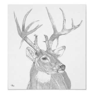Whitetail buck head posters