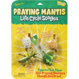 Insect Lore Praying Mantis Life Cycle Stages