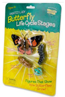 Butterfly Life Cycle Stages Insect Lore Toy Model Larve Egg