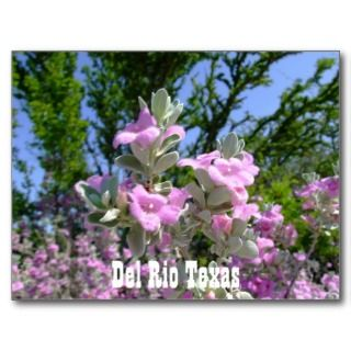 del rio texas souvenirs purple sage post cards