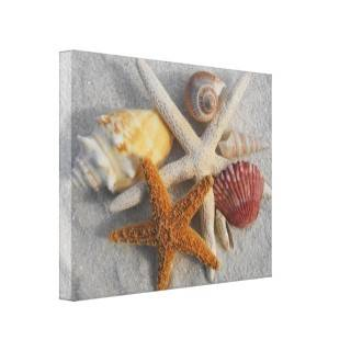 Seashell Collection Vintage Illustration Art Print Stretched Canvas Prints from Zazzle
