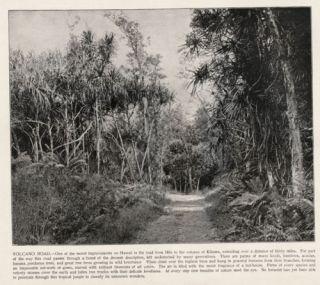 Hawaii Kilauea Volcano Road Antique 1890s Print