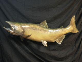 King Salmon Fish Taxidermy Skin Mount