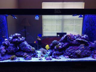 Marineland 120 Gallon Cornerflo Saltwater Fish Tank Aquarium Less an