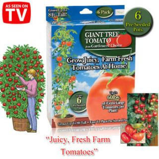 Giant Tomato Trees Gardeners Choice As Seen On TV Grow Tomatos at Home